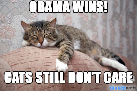 Obama Cats